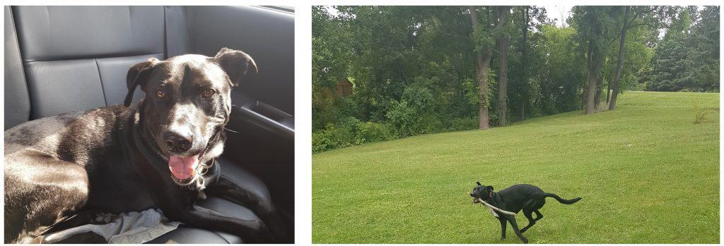 silly dog in car and running