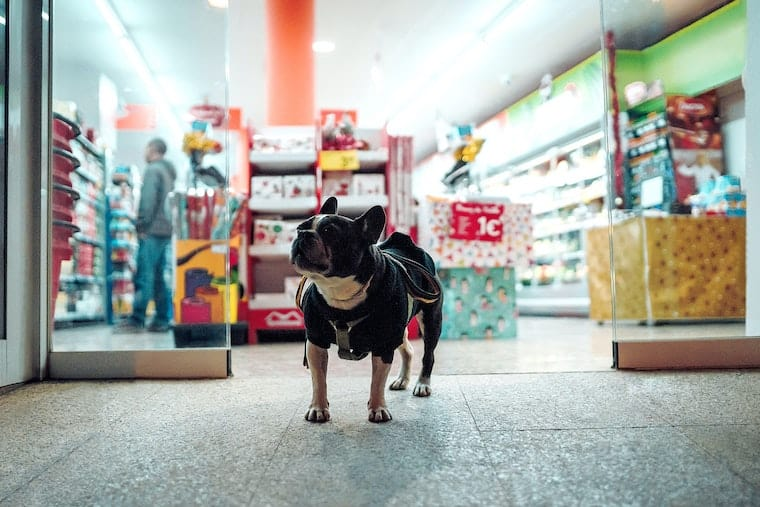 pet shop with dog outside