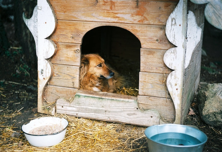 golden dog in wooden dog house with hay and bowls outside