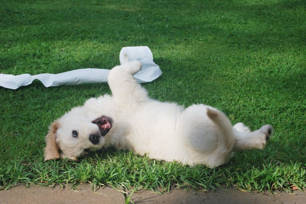 puppy on grass with toilet paper