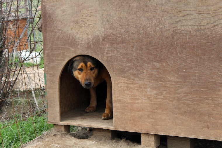 best dog kennel for outdoor use