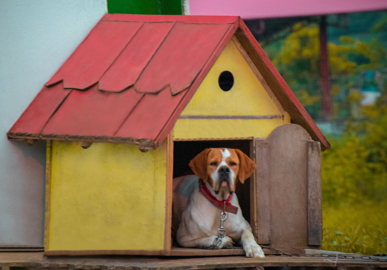 yellow and red dog house with boxer inside